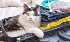 How Animal Lovers Can Save Money on Travel