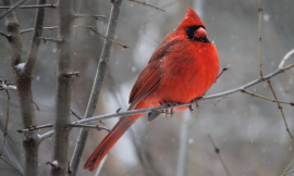 Simple Tricks to Attract Birds in Winter 2018/19